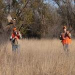 he 2014 statewide pheasants-per-mile index of 2.68 is up from 1.52 in 2013.
